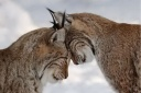 animal-in-love_400328.jpg
