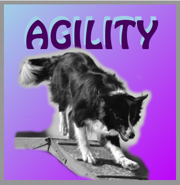 Banner-Agility.png