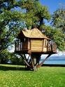 Tree House Buil -